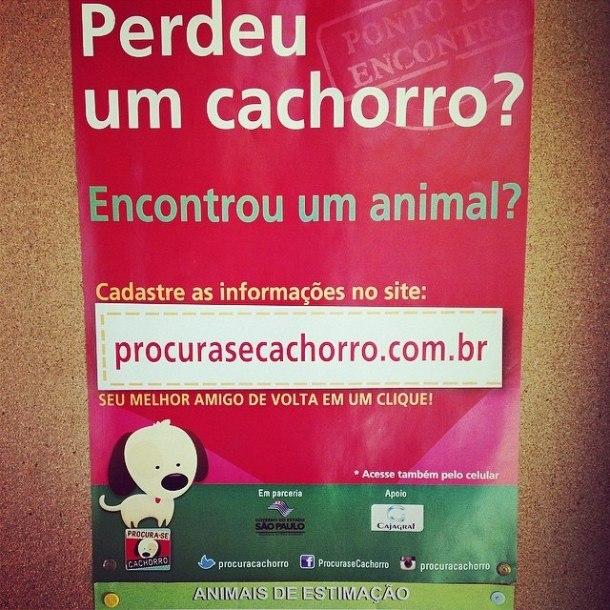 Procura-se Cachorro - Crédito: Divulgação