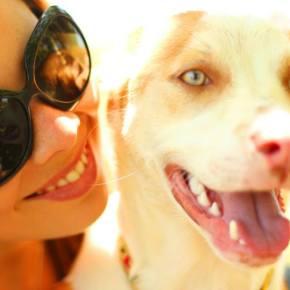 FnR Apoia: Site de busca de cães pedeajuda